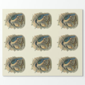 Vintage Science NZ Birds - Kingfishers Wrapping Paper