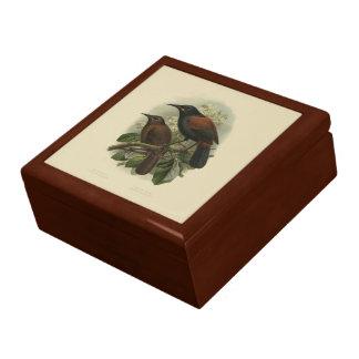 Vintage Science NZ Birds - Saddleback Gift Box