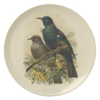 Vintage Science NZ Birds - Tui Melamine Plate