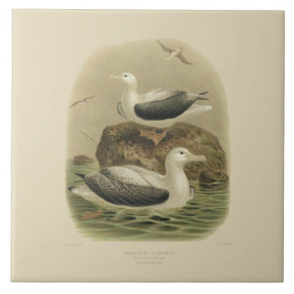 Vintage Science NZ Birds - Wandering Albatrosses Tile