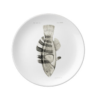 Vintage Science NZ Fish - Banded Parrot Fish Plate