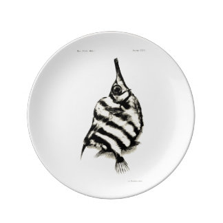 Vintage Science NZ Fish - Bellows Fish Plate