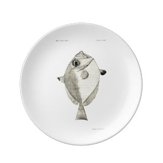 Vintage Science NZ Fish - Silver Dory Plate