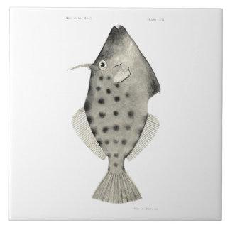 Vintage Science NZ Fish - Smooth Leatherjacket Large Square Tile