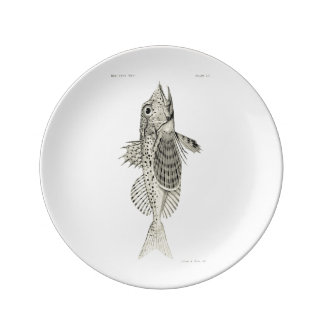 Vintage Science NZ Fish - Spotted Gurnard Plate