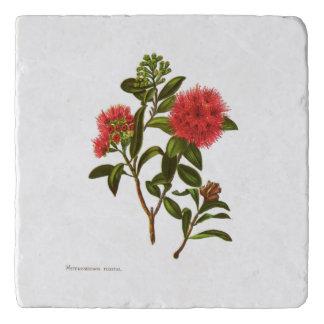 Vintage Science NZ Flowers - Meterosideros florida Trivet