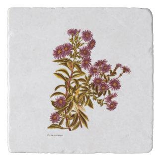 Vintage Science NZ Flowers - Olearia semidentata Trivet