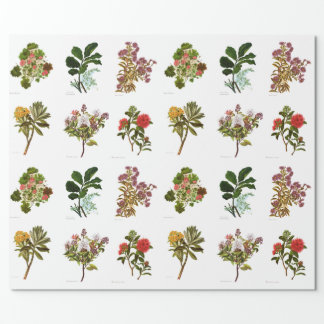 Vintage Science NZ Flowers Wrapping Paper