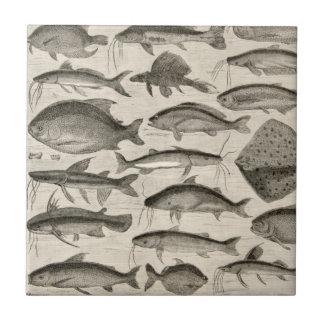 Vintage Scientific Fish Swimming Amazon River Fins Small Square Tile