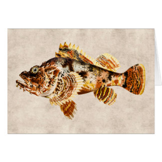 Vintage Scorpion Fish Antique Hawaiian Drawing Card