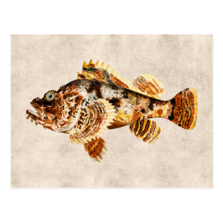 Vintage Scorpion Fish Antique Hawaiian Drawing Postcard