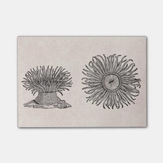 Vintage Sea Anemone Antique Parchment Template Post-it Notes