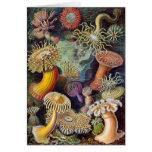 Vintage sea anemones scientific illustration
