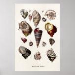 Vintage Sea Shells Personalised Retro Auger Shell