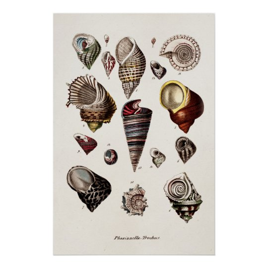 dc249bb277b3 Vintage Sea Shells Personalised Retro Auger Shell Poster | Zazzle.co.uk