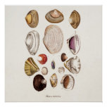 Vintage Sea Shells Personalised Retro Clam Shell Poster