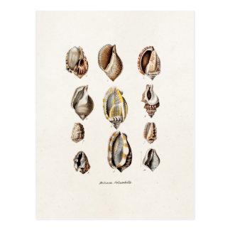 Vintage Sea Shells Personalized Retro Berge Shell Postcard