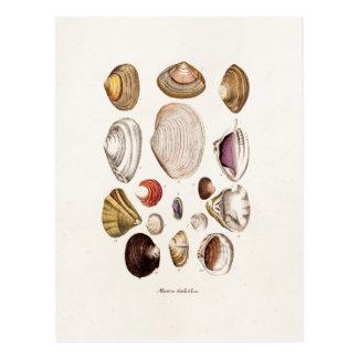 Vintage Sea Shells Personalized Retro Clam Shell Postcard