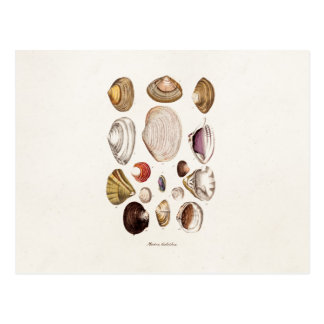 Vintage Sea Shells Personalized Retro Clam Shell Postcard