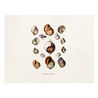 Vintage Sea Shells Personalized Retro Snail Shell Postcard