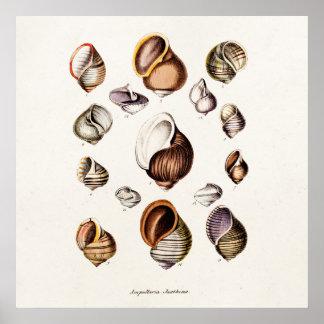 Vintage Sea Shells Personalized Retro Snail Shell Poster