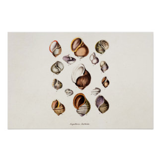 Vintage Sea Shells Personalized Retro Snail Shell Poster
