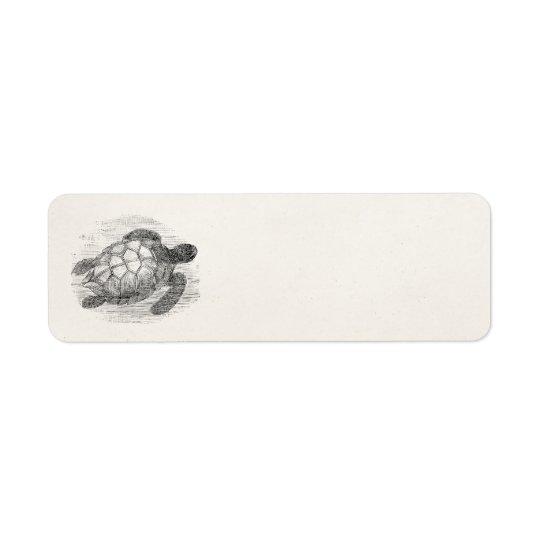 Vintage Sea Turtle Personalised Marine Turtles