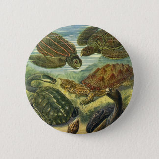 Vintage Sea Turtles Land Tortoise by Ernst Haeckel 6 Cm Round Badge