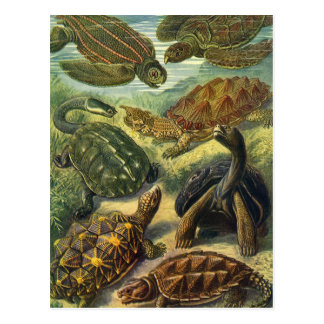 Vintage Sea Turtles Land Tortoise by Ernst Haeckel Postcard