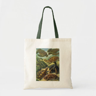 Vintage Sea Turtles Land Tortoise by Ernst Haeckel Tote Bag