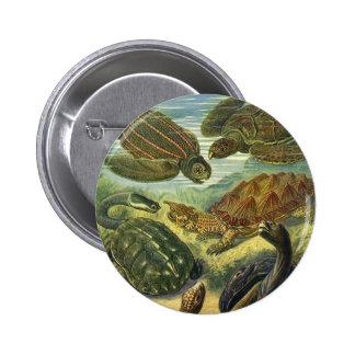 Vintage Sea Turtles Land Tortoise, Marine Animals 6 Cm Round Badge