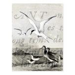 Vintage Seagulls Customised Retro Seagull Template