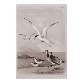 Vintage Seagulls Customized Retro Seagull Template Poster