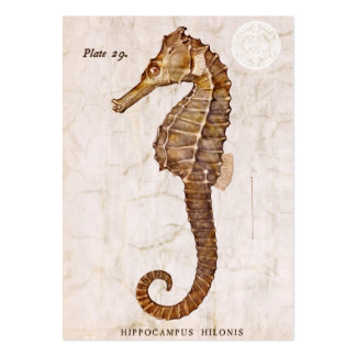 Vintage Seahorse - Antique Seahorses Customized Pack Of Chubby Business Cards