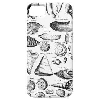 Vintage Seashells iPhone 5 Cases
