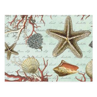 Vintage Seashells...postcard Postcard