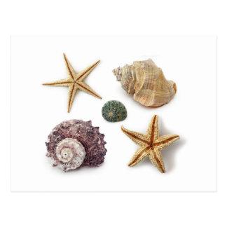 Vintage seashells shabby chic beach decor postcard
