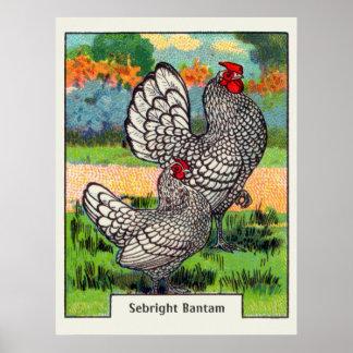 Vintage Sebright Bantam Chicken Poster