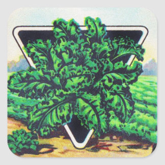 Vintage Seed Package Kale Vegetables Square Sticker