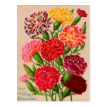 Vintage Seed Packet Cards, Postage and Gifts