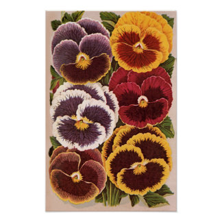 Vintage Seed Packet Label Art, Garden Pansies Poster