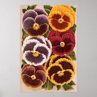 Vintage Seed Packet Label Art, Garden Pansies Poster