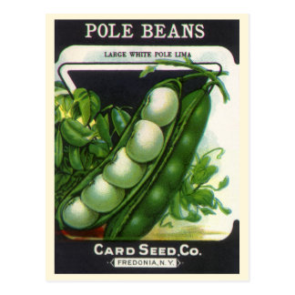 Vintage Seed Packet Label Art, Pole Lima Beans Postcard