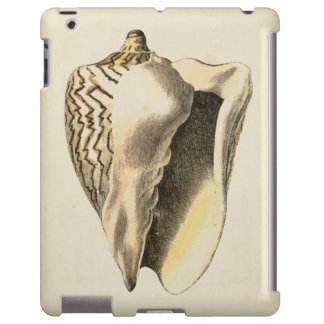 Vintage Sepia Conch Shell