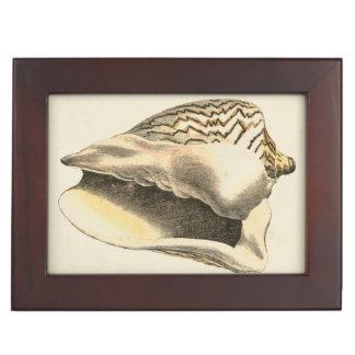 Vintage Sepia Conch Shell Keepsake Box
