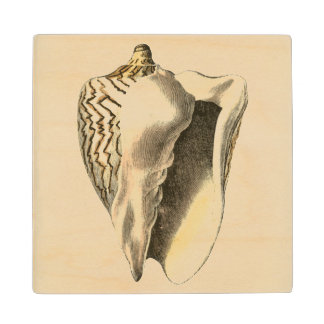Vintage Sepia Conch Shell Wood Coaster