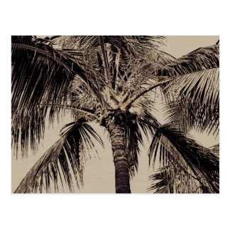 Vintage Sepia Retro Hawaiian Palm Tree Template Postcard