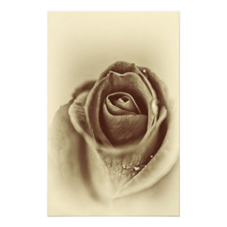 Vintage Sepia White and Cream Rose Photograph