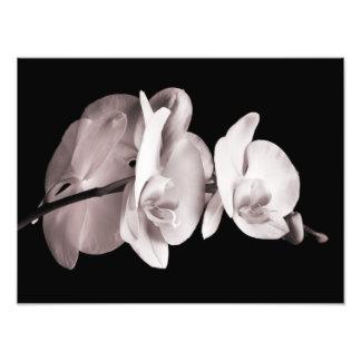 Vintage Sepia White & Cream Dendrobium Orchid Photograph