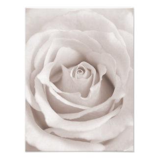 Vintage Sepia White & Cream Rose Background Custom Art Photo